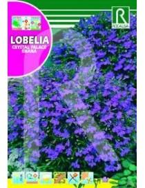 LOBELIA CRISTAL PALACE