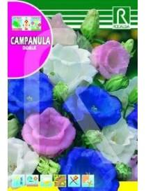CAMPANULA DOBLE