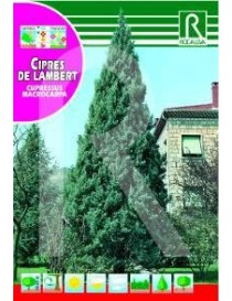 CIPRES DE LAMBERT